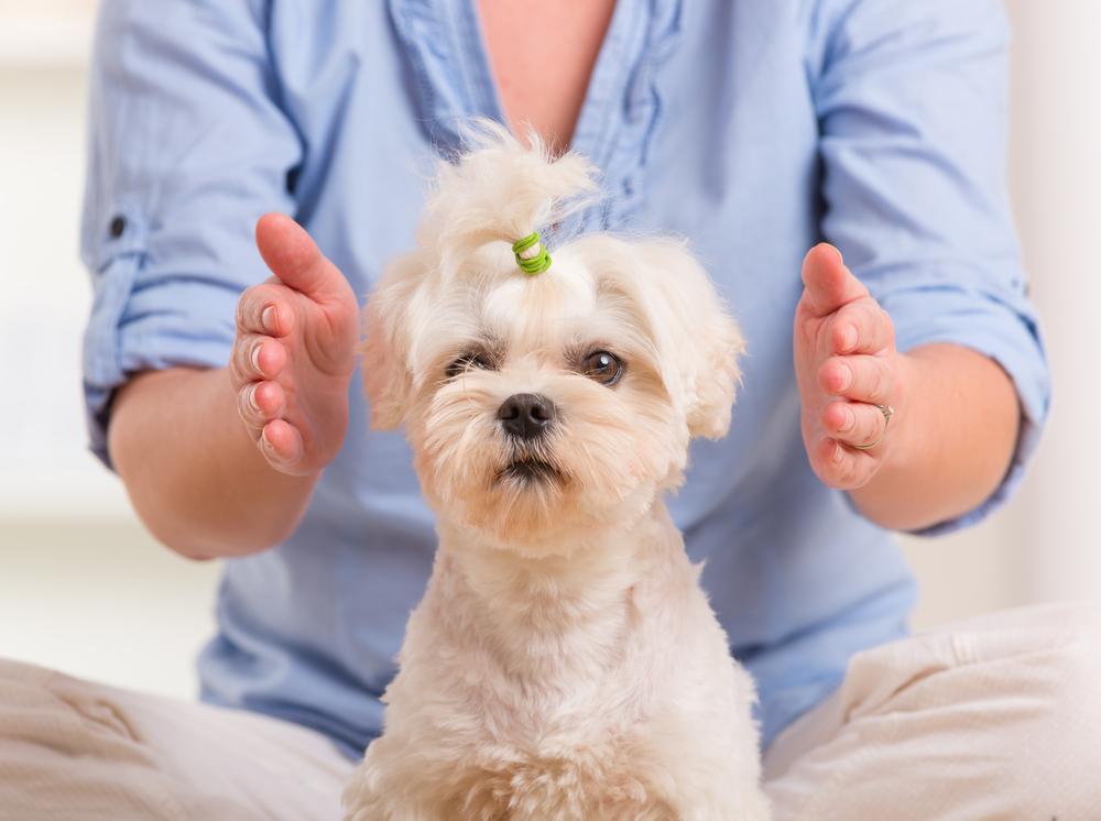 Reiki For Dogs